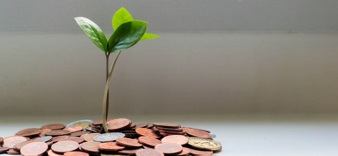 Plant in Stack of Coins My Life Mag